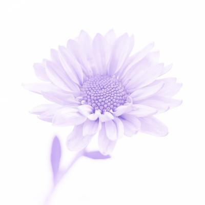 mpj-flower-violet-portrait-jpg