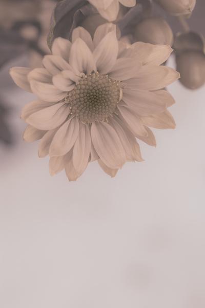 mpj-old-style-flower-jpg
