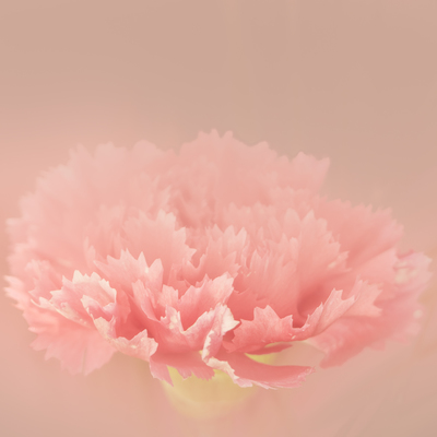 mpj-pastel-flower-dream-jpg