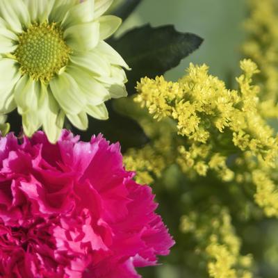 mpj-red-green-flowers-jpg