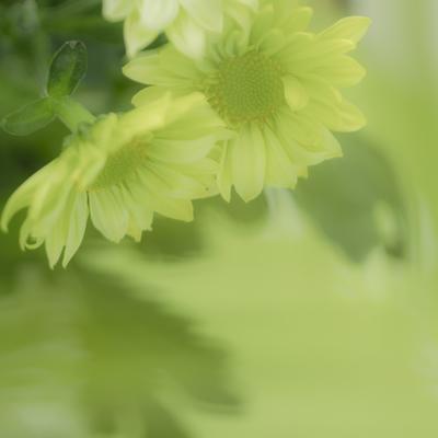 mpj-spring-light-green-floral-jpg