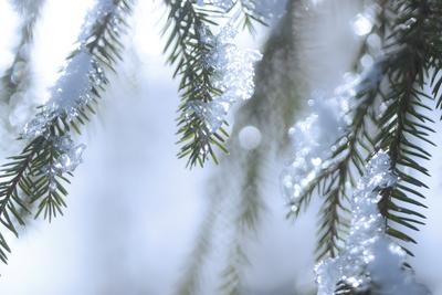 mpj-winter-snow-spruce-3-jpg