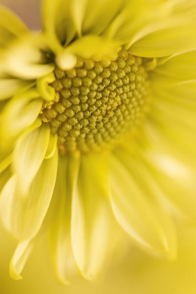 mpj-yellow-flower-sunlight-jpg