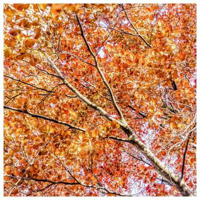 2188-vwl-nature-trees-barks-trunks-branches-forest-fog-jpg