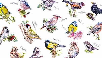 harrison-ripley-birds-jpg