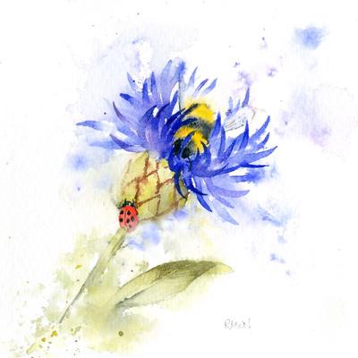 cornflower-jpg-1