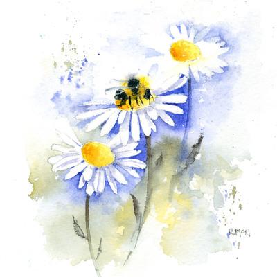 daisy-jpg-2
