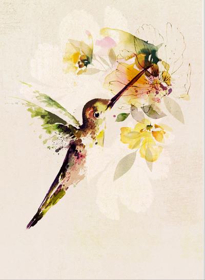 fa-bird-1-01-v1-current-jpg