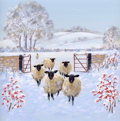 amc-sheep-gate-lo-res-jpg