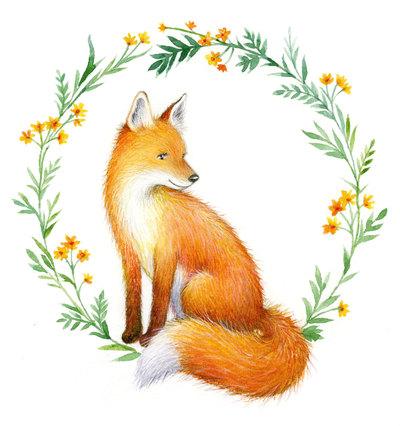 red-fox-1-jpg