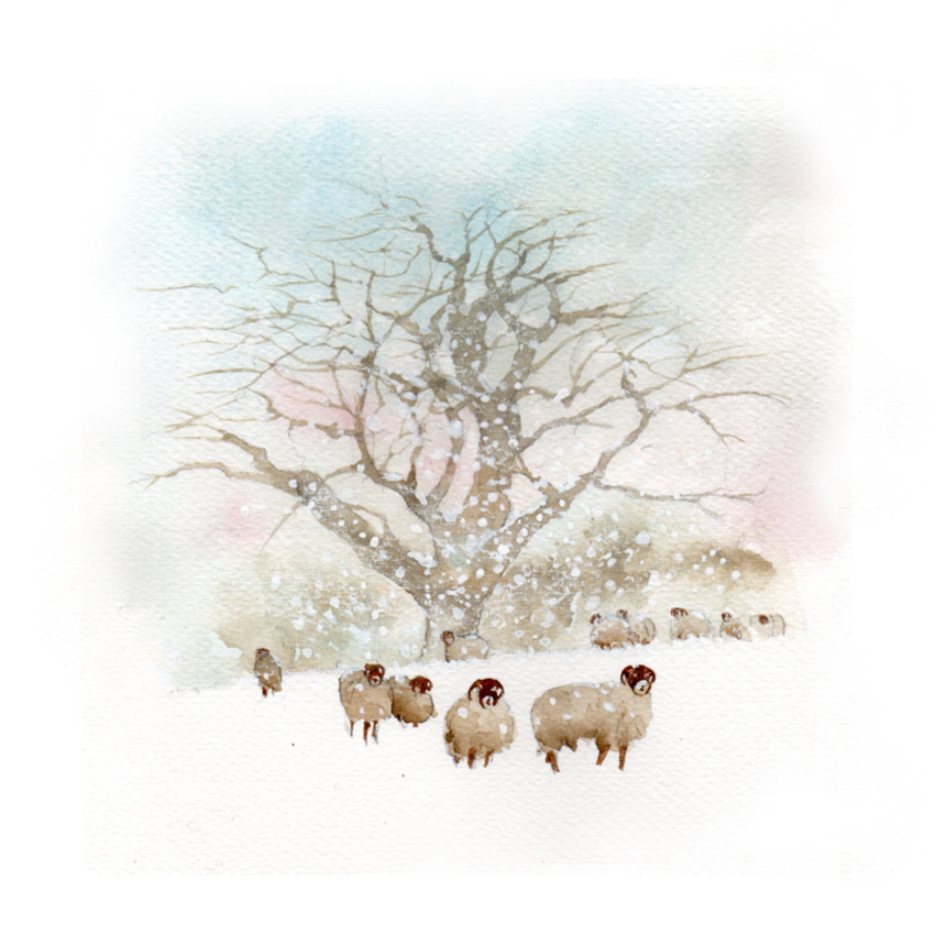 snow old oak and sheep small.jpg