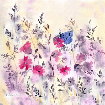 red-campion-blue-butterfly-jpg