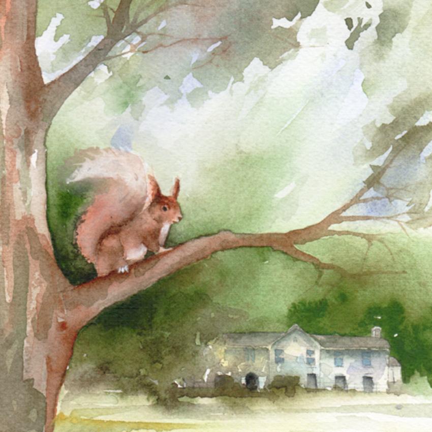 squirrel at Allan Bank low res.jpg