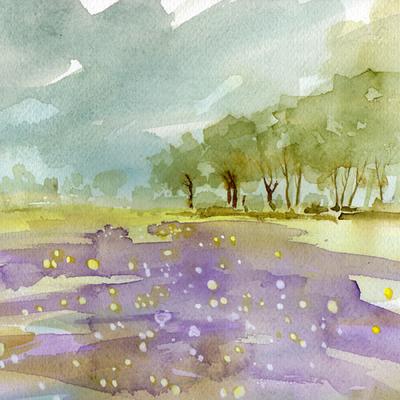 wildflower-meadow-low-res-jpg
