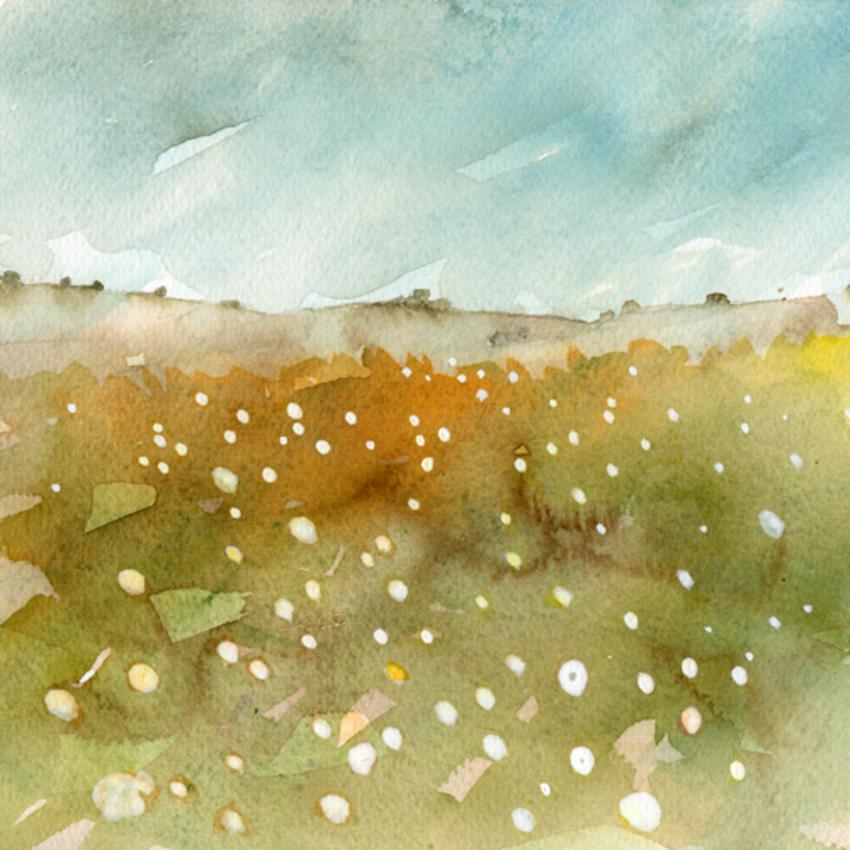 wildflower moorland low res.jpg