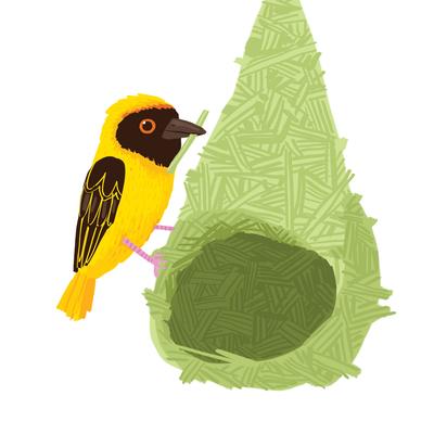 weaver-bird-nest-jpg