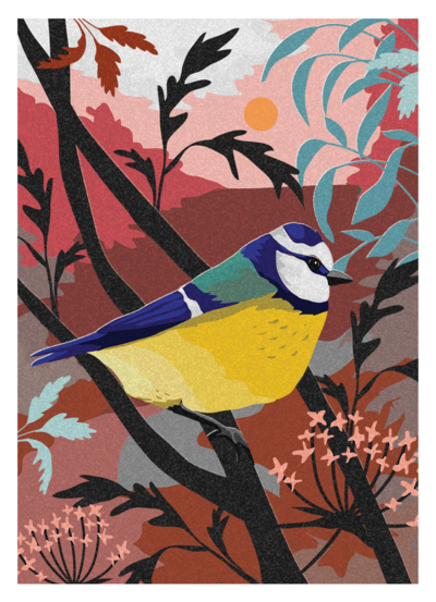 jo-parry-birds-1-png