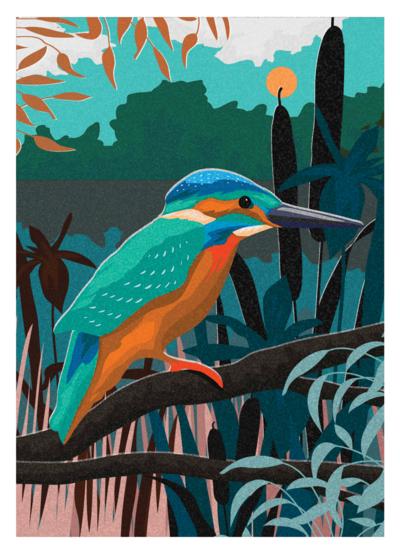 jo-parry-birds-2-png