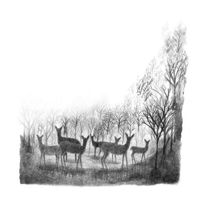 deers-jpg