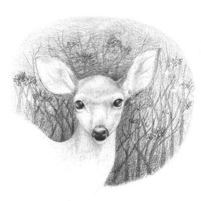 white-deer-head-jpg