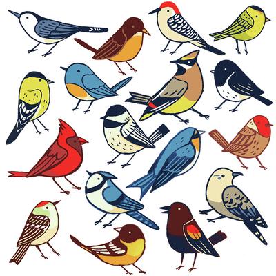 birdspattern-nature-animals-jpg