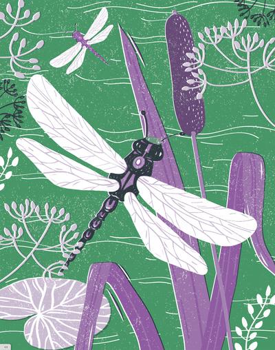 dragonfly-over-pond-jpg