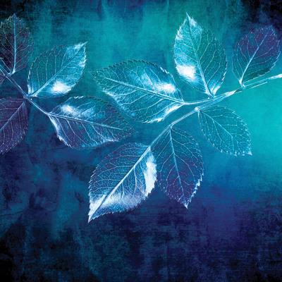 lsk-thoughtful-home-rose-leaves-cyanotype-jpg
