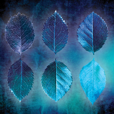 lsk-thoughtful-home-skeleton-leaves-cyanotype-jpg