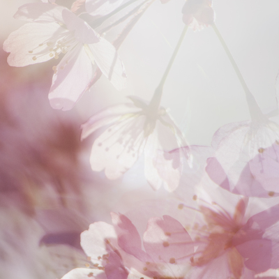 mpj-cherry-blossom-mix-jpg