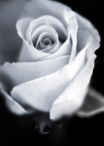 mpj-romantic-rose-grey-jpg