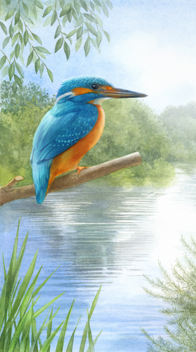 la-kingfisher-aw-jpg