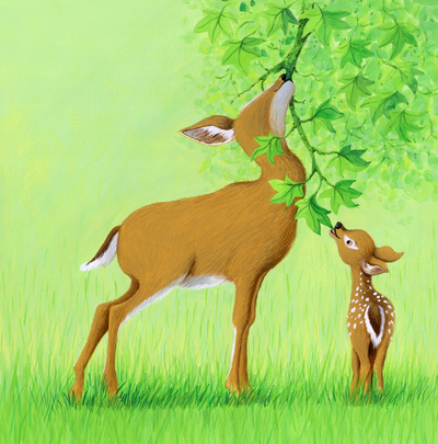 corke-deer-foal-woodland-jpg