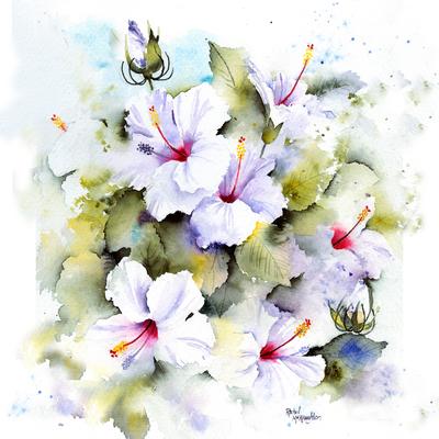 rachelmcnaughton-hibiscus-jpg