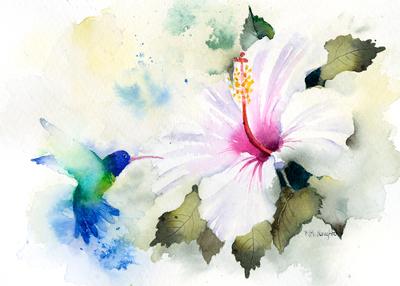rachelmcnaughton-humming-bird-and-hibiscus-jpg