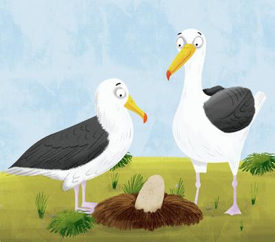 albatross-jpg-1
