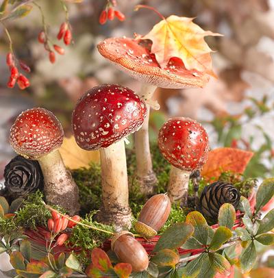 floral-still-life-greeting-card-amanita-lmn64243-jpg