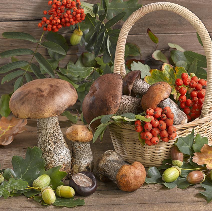 floral_still life_greeting card_mushrooms_LMN63762.jpg