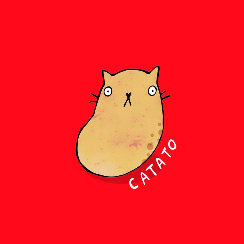 catato.jpg