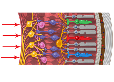 blood-jpg-1
