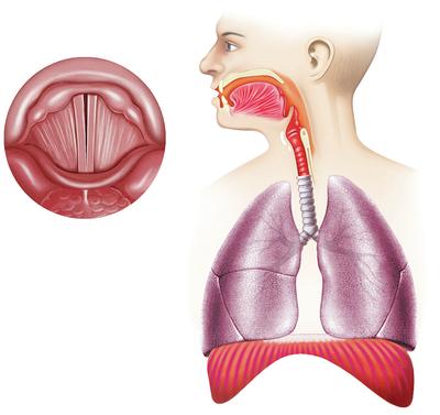 respiratory-system-jpg