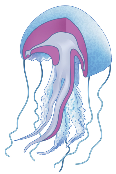 jellyfish-jpg-1