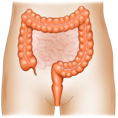 large-intestine-jpg