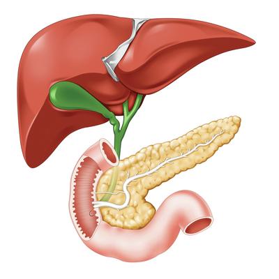 liver-jpg