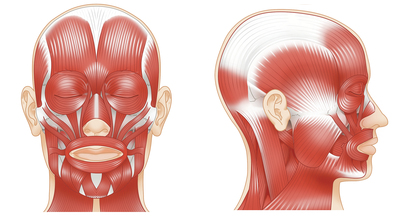 muscles-of-the-head-jpg