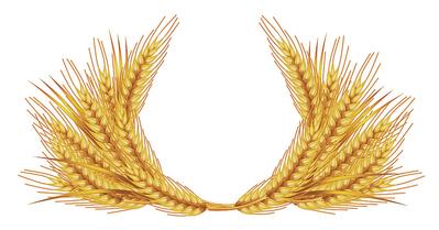 wheat-jpg