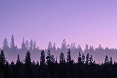 mpj-dreamland-forest-jpg