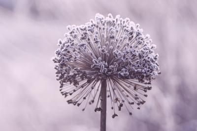 mpj-frozen-flower-ball-jpg