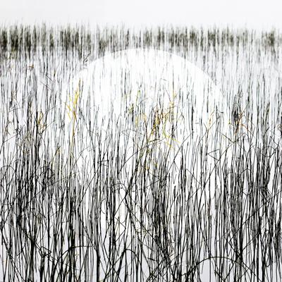 mpj-landscape-circle-jpg