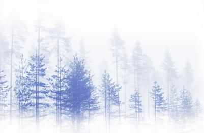mpj-minimal-winter-forest-view-1-jpg