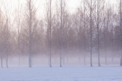 mpj-romantic-birches-winter-jpg